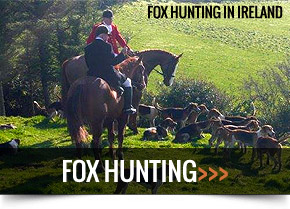 Fox Hunting in Ireland